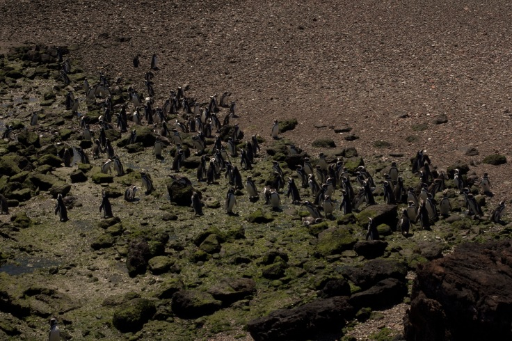 expresso-patagonia-20
