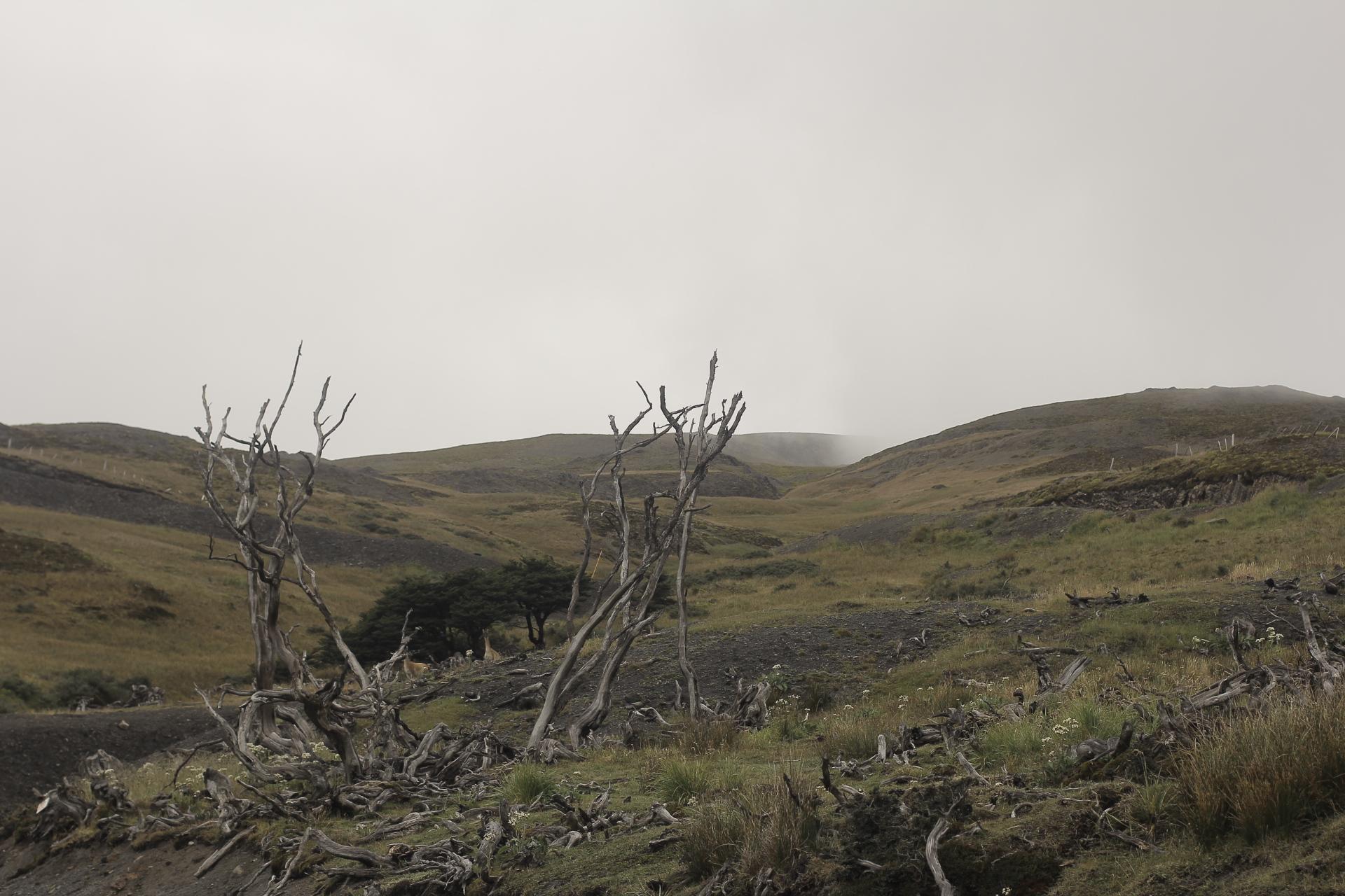 Expresso Patagonia 58
