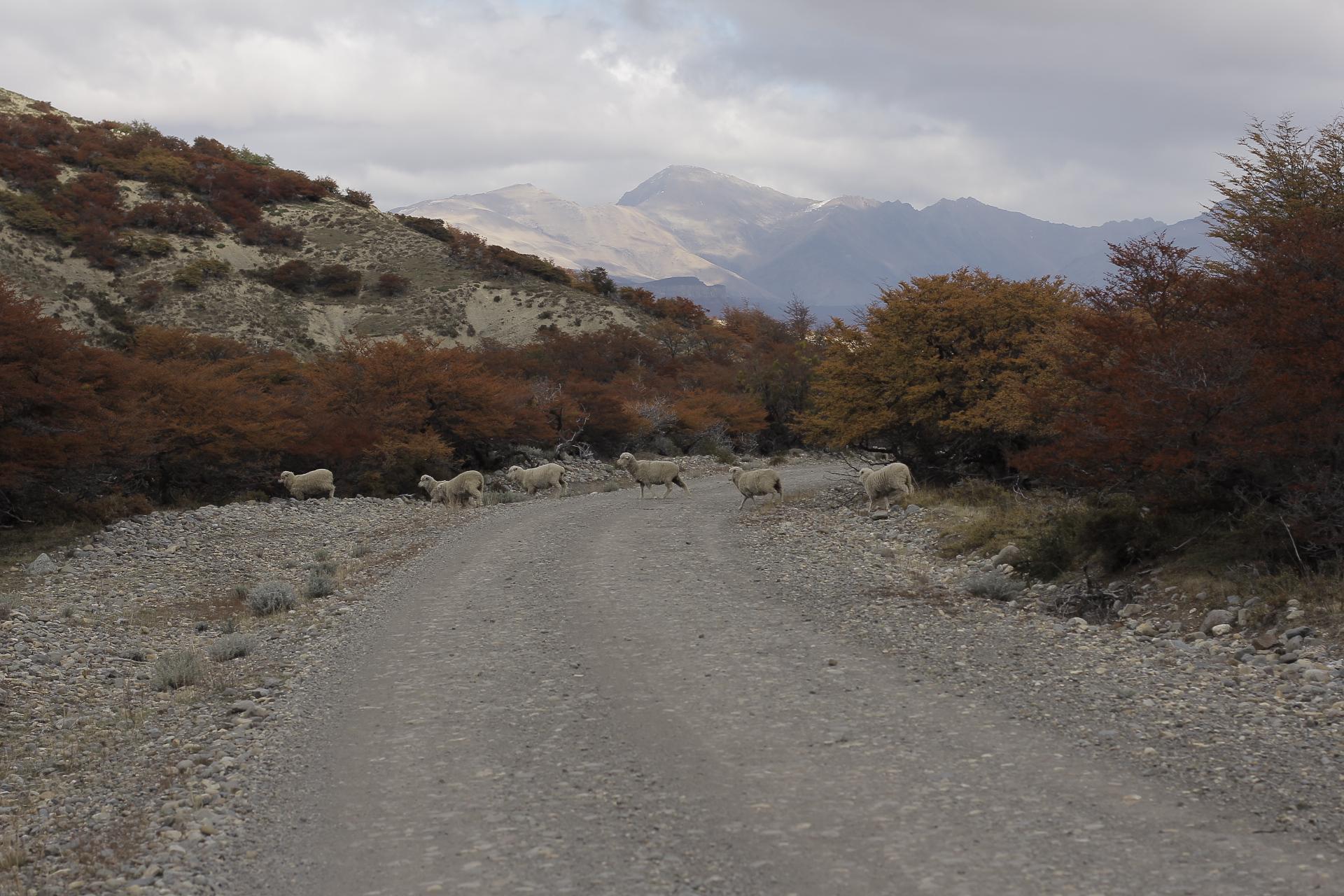 Expresso Patagonia 06
